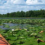 Kayaking Among The Waterlillies Poster