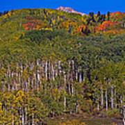 Kebler Pass Panorama Poster