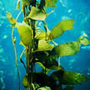 Kelp Two Poster