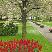 Keukenhof Gardens 33 Poster