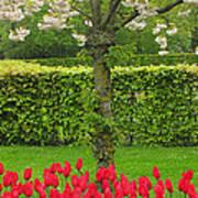 Keukenhof Gardens 34 Poster