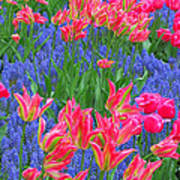 Keukenhof Gardens 5 Poster