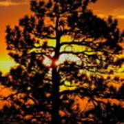 Keystone Pine Poster