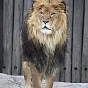 King Lion Poster