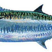 King Mackerel Poster by Carey Chen