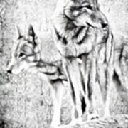 Alpha Male Black And White Poster