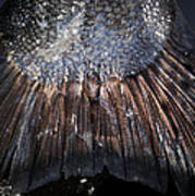 King Salmon Tail Poster