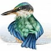 Kingfisher Poster