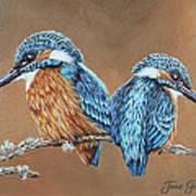 Kingfishers Poster