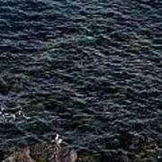 Seagulls At Cliffs Ready To Fish In Mediterranean Sea - Kings Of The World Poster