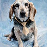 Kippy Beagle Senior And Best Dog Ever Poster