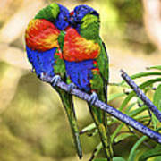 Kissing Rainbow Lorikeets 8 Poster by Heng Tan