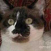 Kitten Black On Chocolate Silktapestrycatstm Poster