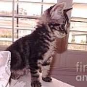 Kitten On Alert Poster