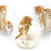Kittens In Bowl Poster