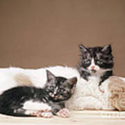Kittens Lying With Puppy Poster