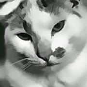 Kitty Kitty Poster