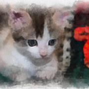 Kitty Photo Art 01 Poster