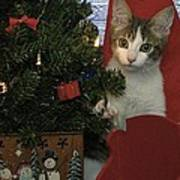 Kitty Says Happy Holidays Poster