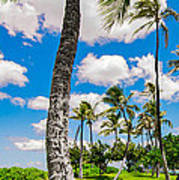 Ko Olina Leaning Palm 3 To 1 Aspect Ratio Poster