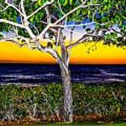 Ko Olina Tree In Sunset Poster