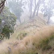 Misty Koa Ridge  Poster