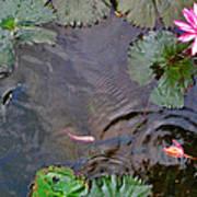 Koi. Lotus. Phu Quoc. Vietnam. Poster