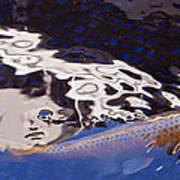 Koi Pond Abstract Poster