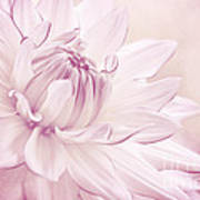 La Dahlia Poster by Angela Doelling AD DESIGN Photo and PhotoArt