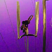 La Loupiote In Lavender Poster