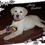 Lab Pup Merry Christmas Poster