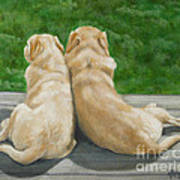 Labrador Lazy Afternoon Poster