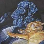 Labrador Love Poster