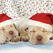 Labrador Puppy Dogs Wearing Christmas Poster