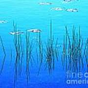 Lacassine Pool Reeds Poster