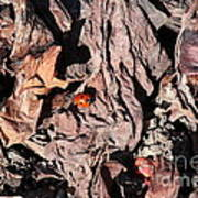 Lady Bug In Spring Poster