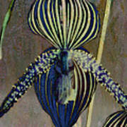 Lady Slipper Secret Garden Poster