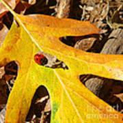 Ladybug Leafing By Diana Sainz Poster