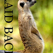Laid Back Meerkat Phone Case Cut Poster