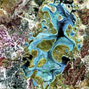 Lake Carnegie Western Australia Poster by Adam Romanowicz