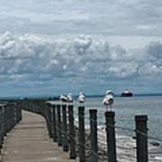 Lake Erie Gulls Poster