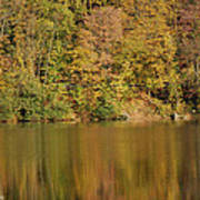 Lake In Autumn Poster