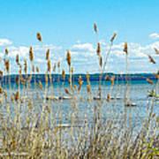 Lake Michigan Shore Grasses Poster