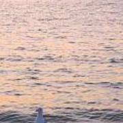 Lake Michigan Sunset With Birds Poster