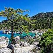 Lake Tahoe Bonsai Tree Poster by Scott McGuire