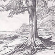 Lake Tree Poster