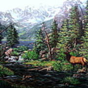 Lake Verna Elk Poster by W  Scott Fenton