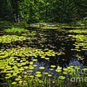 Lake With Lily Pads Poster
