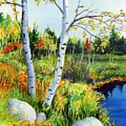 Lakeside Birches Poster