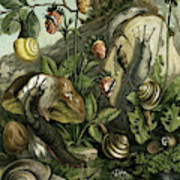 Land Molluscs Or Snails And Slugs Poster